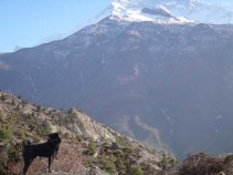 Day 6 Dhukur Pokhari to Braka 052